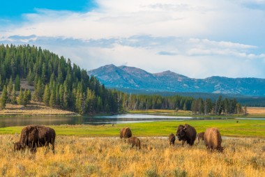 First-time Visitors Guide to Yellowstone National Park